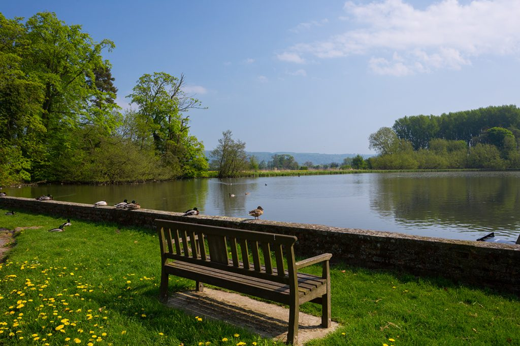 Ducks and swans at Newburgh Priory, just 10 minutes walk away from Forge Cottage, Coxwold