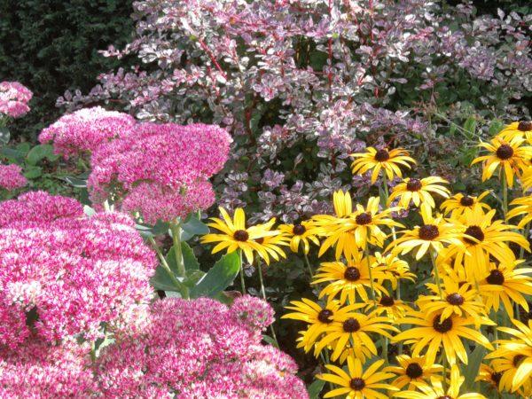 Autumn Colour in Coxwold garden
