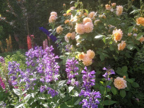 Summer colour at Coxwold Cottages