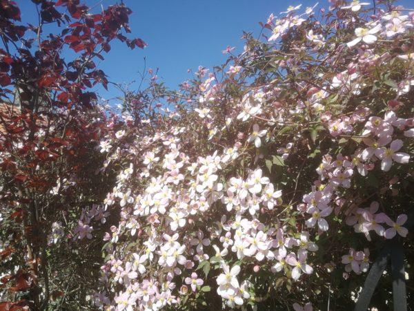 Garden colour at Coxwold Cottages