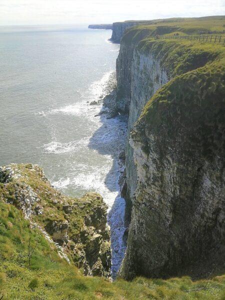 Seabirds nesting at Bempton Cliffs