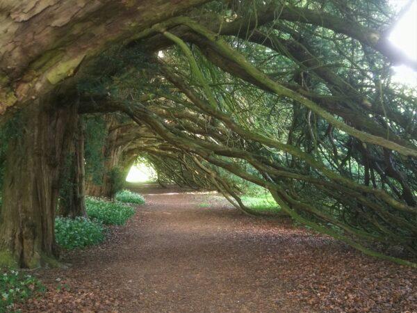 The photogenic yew walk at Duncombe
